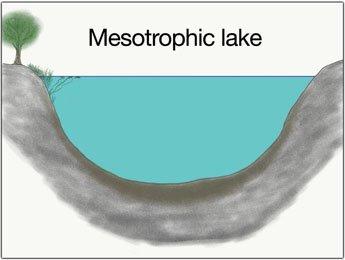 mesotrophic-lake-catch-big-pike